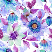 Transparent Purple Clematis Flowers On Climbing Twigs Against White Background. Seamless Spring Floral Pattern. Watercolor Painting. Hand Painted Illustration.