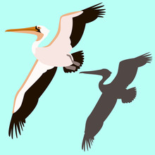 Pelican Bird  Vector Illustration Flat Style Silhouette