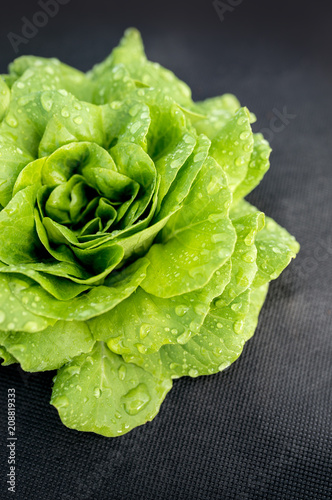 green Aquino salad on the garden, leaf salad as an agricultural crop Wallpaper Mural