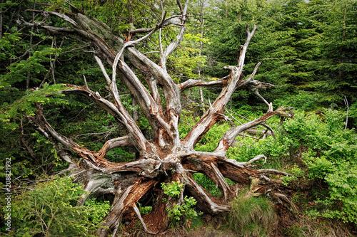 Fototapeta Spring landscape - Black Forest