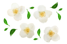 Jasmine Flower Decorated With ...