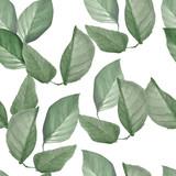 wiśnia zielone liście akwarela bezszwowe wzór - 208833725