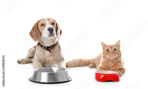 Photo sur Toile Chat Adorable cat and dog near bowls on white background. Animal friendship