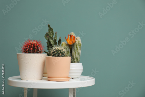 Keuken foto achterwand Cactus Beautiful cacti in flowerpots on table near color wall