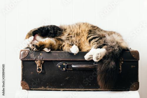 cat relaxing on vintage suitacase