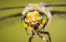 Smiling Dragonfly :)