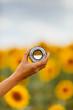 Caucasian woman enjoying summer time at sunflowers field