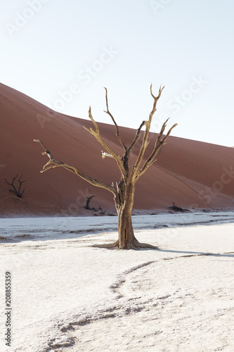 Scenic view of Deadvlei, a famous clay pan in Namibia