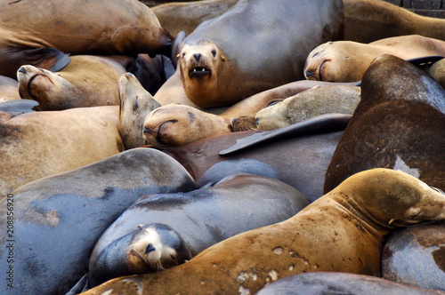 Fishermans Wharf San Francisco Cute Seals Sleeping Buy This Stock Photo And Explore Similar Images At Adobe Stock Adobe Stock