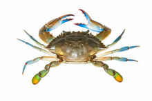 Blue Crab Isolated On White Ba...