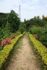 Fototapeta na wymiar Sanjay Ghandi National Park, Mumbai, India