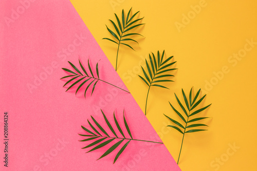 Palm leaves on vibrant pink and yellow background