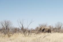 An Elephant In The Etosha Nati...