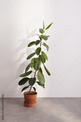 green plant with big leaves in front of a wall