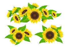 Sunflower Collection With Bud And Leaf, Bouquet And Border Decoration. Vector Illustration Isolated On White For Summer And Nature Design