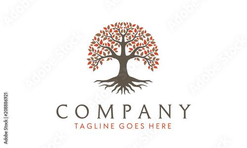 Canvas-taulu Tree of Life, oak banyan leaf and root seal emblem stamp logo design inspiration