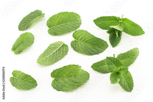 Canvas Prints Condiments Fresh Mint Isolated on White