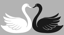 Two Swan Lovers One Against An...