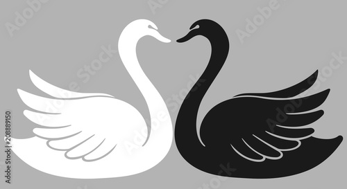 Fotografie, Obraz two swan lovers one against another shaping a heart