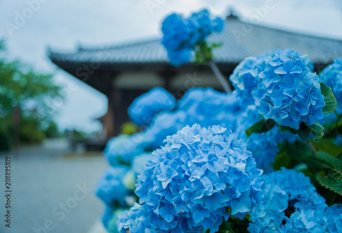 Photo 建築様式・寺社・あじさい