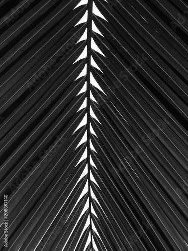beautiful-palms-leaf-on-white-background