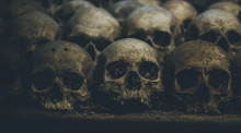 Collection Of Skulls Covered W...