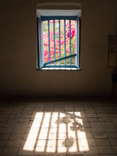 View Of Pink Flowers Colored By The Bright And Barred Window Of A Dark Room.