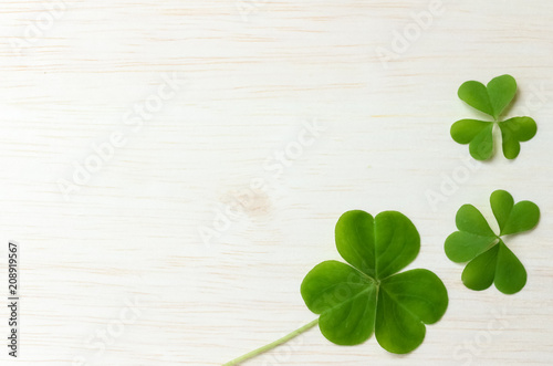 Canvas Print Clover background image