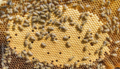 Photo Bee. honey. insect. beekeeping