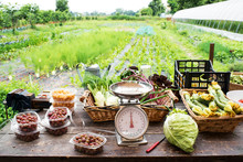 Scale With Fresh Farm Produce ...