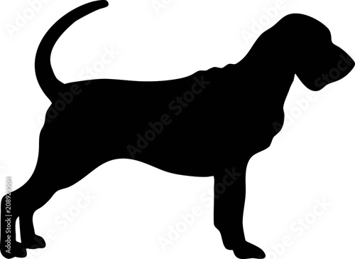 Bloodhound silhouette black Canvas Print
