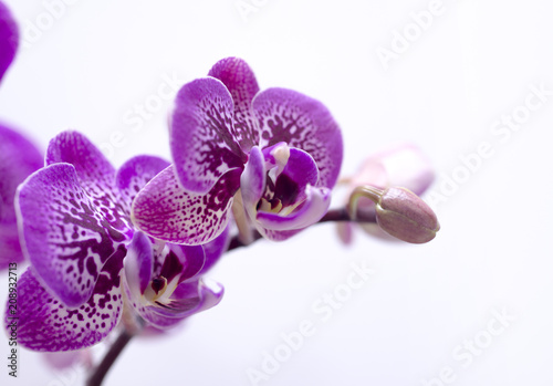 Foto op Aluminium Orchidee Close up of white and pink orchid flower