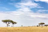Fototapeta Sawanna - Masai Mara landscape