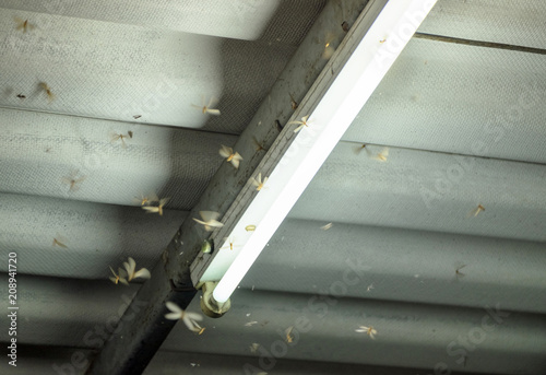 Photo Termite crowd flying around lamp lighting front house
