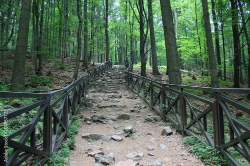 Kamienne schody w lesie, szlak turystyczny na Łysicę, Góry Świętokrzyskie