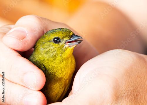 Cuadros en Lienzo Aplicando Reiki em pássaro