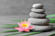 Stones balance and plant. Zen and spa concept.