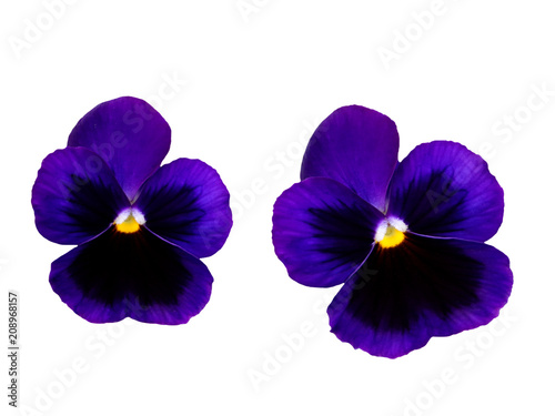 Papiers peints Pansies Pair of violets flowers isolated, pansy