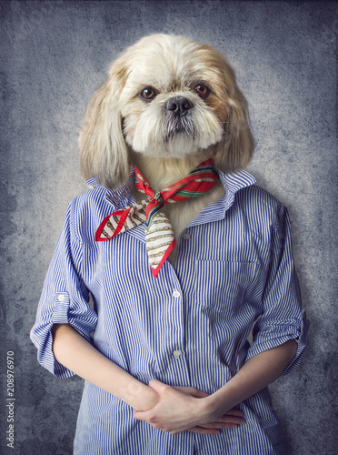 Cute dog shih tzu portrait, wearing human clothes, on vintage background. Hipster dog