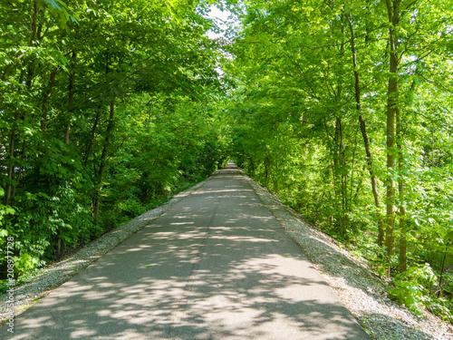 Fotografia, Obraz  Shady tree-lined avenue receding in straight line