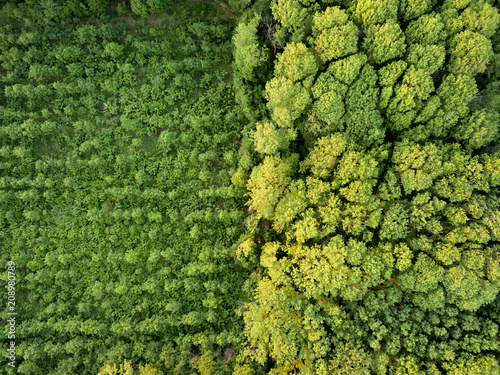 Fotomural Aerial view from the drone, a bird's eye view to the forest with green plantings of various ages and heights