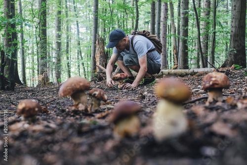 Fototapeta  Man collect mushrooms in summer forest