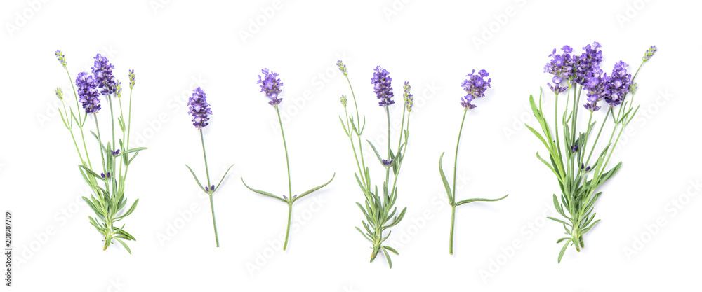 Fototapety, obrazy: Floral banner flat lay Lavender flowers