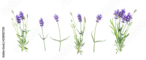 Photo Floral banner flat lay Lavender flowers