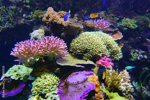 Colorful corals under water in an aquarium