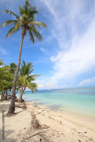 Tropical beach scene with palm trees