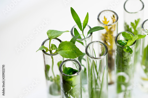 Foto op Canvas Planten Green fresh plant in glass test tube in laboratory on white background. Close up macro.