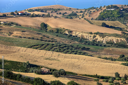 Foto op Aluminium Khaki Panoramic view of olive groves and farms on rolling hills of Abruzzo and in the background the Adriatic Sea. Italy