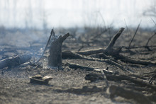 Smoldering Stump After Fire Smoke