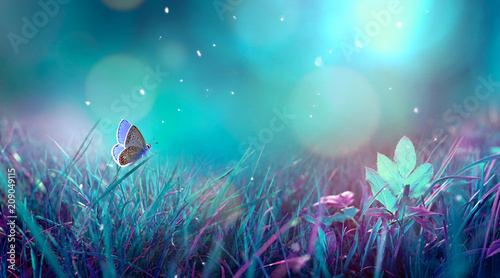 Photo Stands Turquoise Butterfly in the grass on a meadow at night in the shining moonlight on nature in blue and purple tones, macro. Fabulous magical artistic image of a dream, copy space.